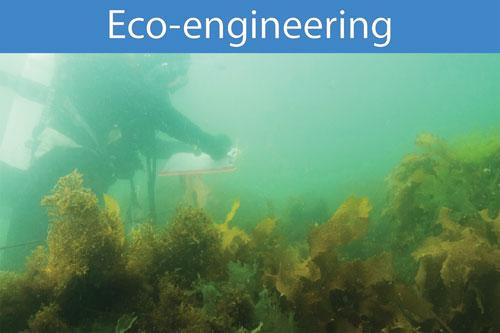 Eco-Eng-500web