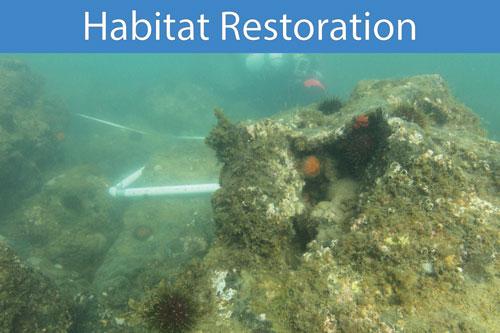 Habitat-Restoration-500web